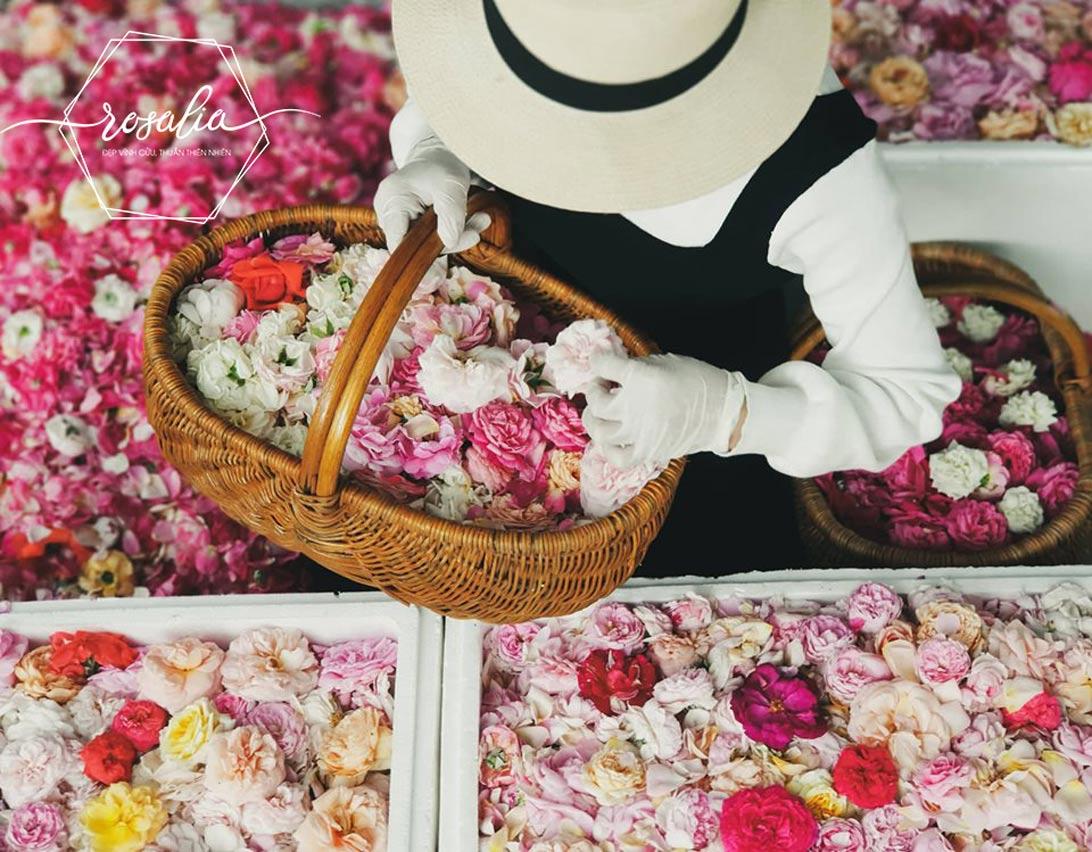 Rosalia by Bảo Hiên: Cách làm trà hoa hồng khô bảo quản được lâu nhất