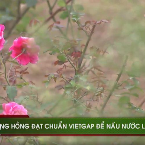 Rosalia by Bảo Hiên