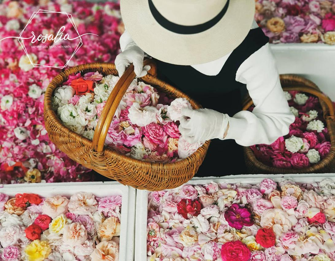 Rosalia by Bảo Hiên - Hướng dẫn bạn cách làm trà hoa hồng khô