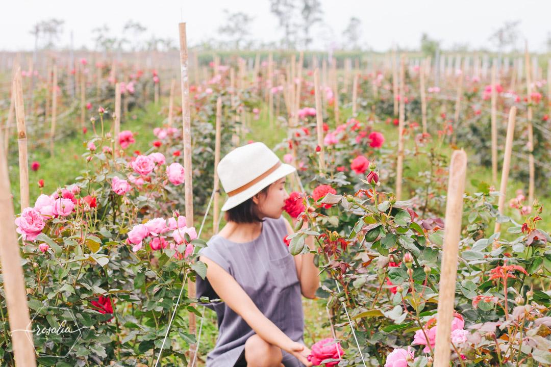 Rosalia Bảo Hiên Farm